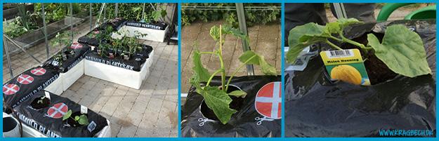 drivhusplanter_planter_2014