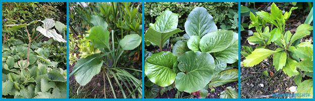 Her er nogle af de planter jeg mangler et navn på.